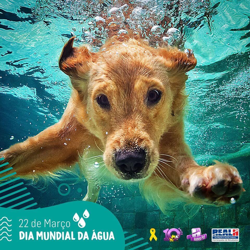 Seja para pequenos ou grandes animais, nossos produtos não polui a água.