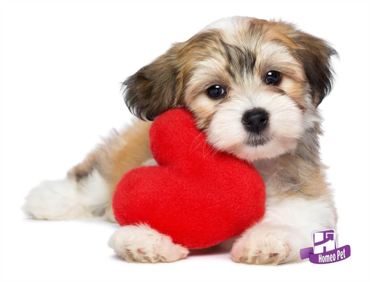 Cuide do Coração do Seu Pet